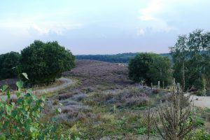Fietsenwinkel-Arnhem-Pedaalslag--wielrennen-wielrenners-mountainbikers
